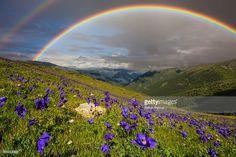 ストックフォト : Rainbow over the flowering meadow