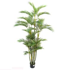 I've just found Artificial Large Kentia Palm. The perfect interior plam tree 100% maintainance free.. £89.95