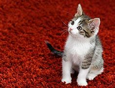 1000 Images About Pee Smell Removal On Pinterest Cat