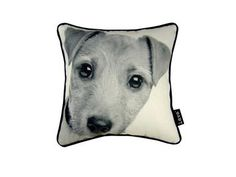 Jack Russell 12X12 Pillow