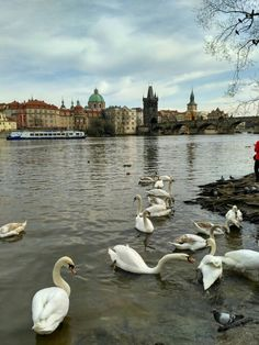View of the Charles Bridge from Kampa Park