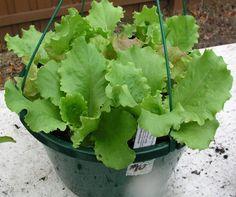 Florida Backyard Vegetable Gardener