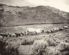 The Ake-Wadsworth wagon train consisted of two buggies, seven wagons, 24 men, 16 women and seven children, along with 800 head of cattle and as many goats and sheep.  – True West Archives –