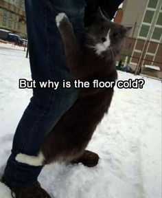 50 Funny Animal Pics That We Bring Pleasure to Your Week
