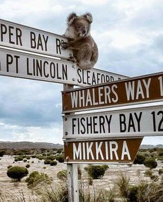The Eyre Peninsula is a triangular peninsula in South Australia. Embark on the ultimate seafood safari & get up-close to dolphins, sea lions and sharks, all along the Eyre peninsula Peninsula's stunning coastline. Animals And Pets, Baby Animals, Cute Animals, South Australia, Australia Travel, Image Of The Day, Little Critter, The Beautiful Country, Pet Birds