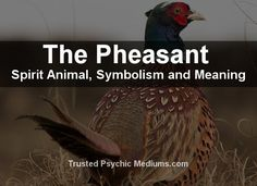 What does the Pheasant spirit animal really mean? Find out the true meaning and symbolism of the Pheasant in this special spirit animal analysis. Bird Meaning, Spirit Meaning, Feather Meaning, Spirit Animal Totem, Animal Spirit Guides, Animal Totems, Feather Symbolism, Power Animal