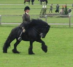 fell pony | Courtesy: Littletree Fell Pony Stud