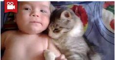 Cat Loves Baby <3  Watch here: http://meowaum.com/1547-cat-loves-baby/