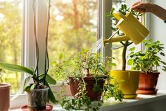 Few things can brighten up a home quite like some indoor houseplants. But if you're not exactly an expert gardener and you have more of a black thumb than a green thumb, you might feel reluctant to …