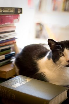 Library kitty. My cat loves to read with me. Sometimes stands on the pages to get a better view.