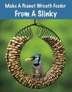 a slinky becomes a cute bird feeder, can add dried fruit or bugs to it, for variety for the picky birds (LOL)