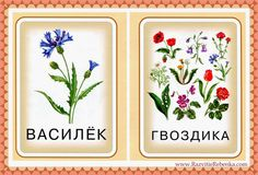 РАЗВИТИЕ РЕБЕНКА: Карточки Цветы Botany, Container, Plants, Kids, Printables, Children, Plant, Baby Boys, Planting