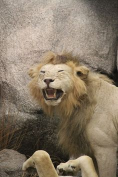 Photographs I shot at the Natural History Museum of Los Angeles County