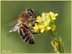 Save our honeybees