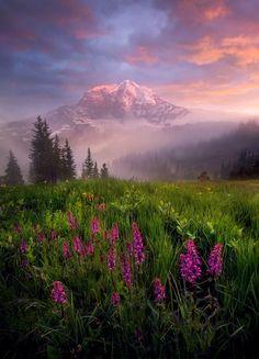 Mystic Park (USA) by Marc Adamus