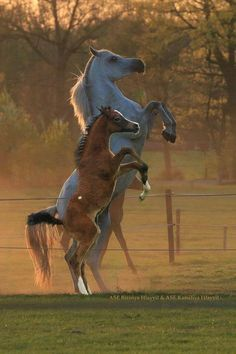 Mommy teaching her foal, how to cut loose!