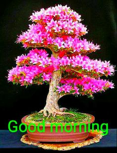 Good Morning Images For Whatsapp Good Morning Wishes Gif, Good Morning Friends Images, Good Morning Beautiful Flowers, Good Morning Nature, Good Morning Cards, Good Morning Beautiful Images, Good Morning Photos, Morning Pictures, Latest Good Morning Images
