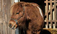 Ponyreiten im Familienurlaub Horses, Animals, Pony Rides, Petting Zoo, Family Vacations, Adventure, Animales, Animaux, Animal