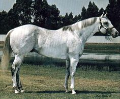 Beduino 6 wins to 4, $11,630.00 in Mex., 2nd: Windsor Stakes (MEX). A leading sire of SWs {the all-time leading TB sire of racing quarter horse money earners} with get earnings of $13,298,309. Sire of AQHA: 496 ROM, 40 SWs, 10 World Champions, earning $13,149,809. 21 Superior Race horses, 2 Superior Halter horses, and 2 Superior Performance horses. AQHA Hall of Fame 2008