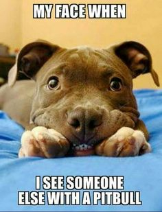 My face when I see someone else with a pitbull. Pitbulls are the best dogs! Animals And Pets, Baby Animals, Funny Animals, Cute Animals, Cute Puppies, Cute Dogs, Dogs And Puppies, Doggies, Beautiful Dogs
