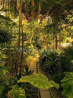 Tropical Garden Warm Shades by Niina Niskanen   Redbubble