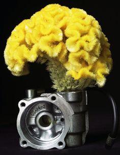ikebana201509::Celosia argentea+a machine part(鶏頭+機械部品)‐⒈