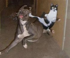 Cats are amazing hunters. It's no wonder these kitties are real ninja cats! Check them out here. Funny Animal Jokes, Cute Funny Animals, Animal Memes, Cute Baby Animals, Funny Cute, Funny Dogs, Super Funny, Crazy Animals, Funny Kittens