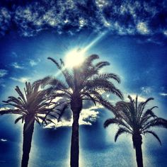 Palms on the Split center harbor boardwalk