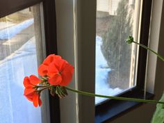 Life After 50: Focus on the Positive March 8, 2015