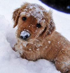 Puppy! In the snow!