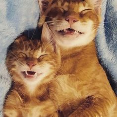 Quem sai aos seus  Follow: @odonocuida . . #cat #catsofinstagram #cats #catstagram #instacat #catlover #catoftheday #ilovemycat #catlovers #catsagram #lovecats #instagramcats #cats_of_instagram #instacats #cutecat #catlife #ilovecats #catofinstagram #gato #gatos #cutecats #catsofinsta  #petstagram #instapets #cutepets #animaisdeestimação #portugal