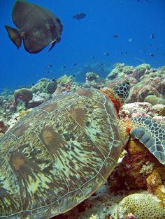 Underwater life in Palau!