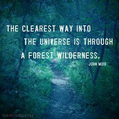 The clearest way into the universe is through a forest wilderness quote by John Muir