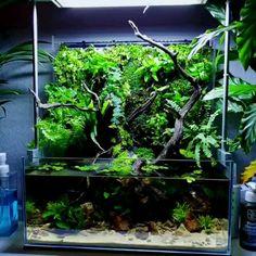 Very Wonderful Forest Paludarium Tank - aquascaping Planted Aquarium, Aquarium Aquascape, Diy Aquarium, Aquarium Design, Aquariums, Aquarium Garden, Aquarium Driftwood, Aquarium Landscape, Nature Aquarium