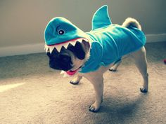 Pug Shark