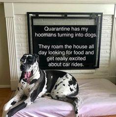 The Funniest Quarantine Dog Memes - It's Rosy Animal Captions, Animal Memes, Funny Animals, Funny Dog Memes, Funny Dogs, Famous Novels, Famous Words, We The Best, Dog Hacks