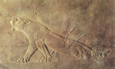 Empire Assyrien, Ninive, scène de chasse du roi Assurbanipal (-668 à - 629) : La Lionne Blessée Source de l'image :  L'orient ancien, édité par Terrail (1997)