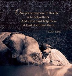 Our prime purpose... Dalai Lama