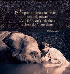 Our prime purpose... Dalai Lama
