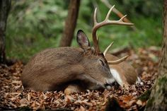 Charles Alsheimer : How the October Lull Influences Your Deer Hunting
