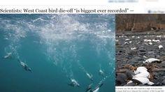 Massive Animal Die Off/West Coast/Alaska