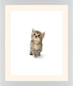 Kitten Framed Print, White, Contemporary, None, Cream, Single piece, 16 x 20 inches