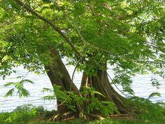 Lake n trees