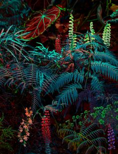 Jungle Images, Jungle Pictures, Tropic Jungle, Jungle Life, All Nature, Create Photo, Tropical Plants, Plant Leaves, Scenery