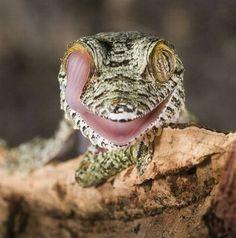 lengua en el ojo