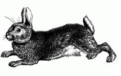Vintage Rabbit Easter pen and ink drawing engraving art
