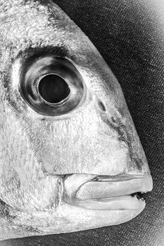 whileatsea: by Sanghyeok Bang Ice Fishing Gear, Fishing Worms, Fishing Gifts, Going Fishing, Mullet Fish, Bass Fishing Videos, Fishing Photography, Life Aquatic, Fishing Techniques
