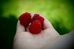 Summer, Raspberries, Hand, Gift