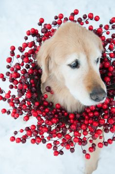 Red Winter Beauty