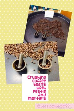 Exploring coffee beans and grinding them using pestle and mortars. EYFS